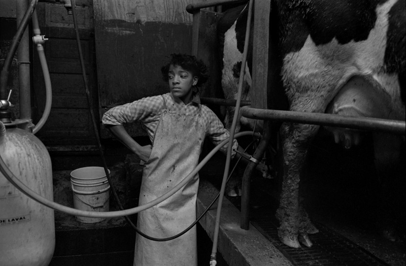 Tanese Wilson Milking at Her Father's Dairy, Waco, NC