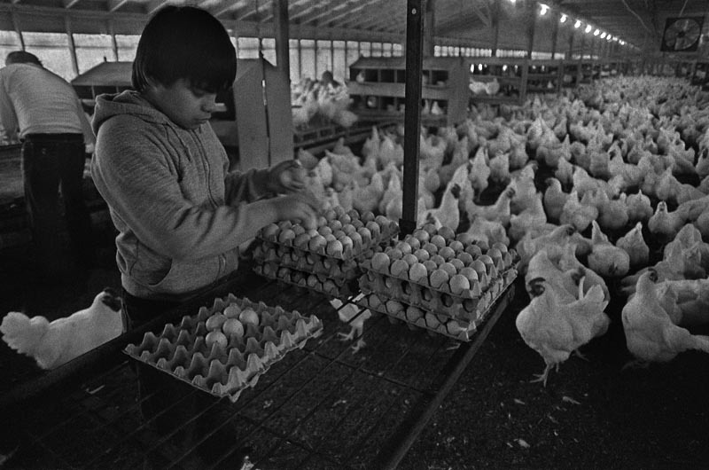 14-year-old Salvadorian Migrant Collecting Eggs, Iredell County, NC