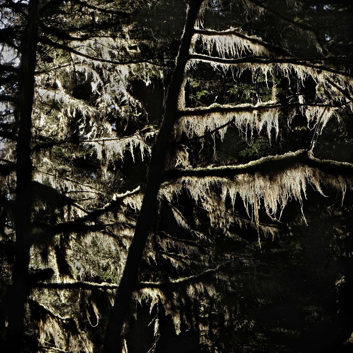 Sol Duc Waterfall Trail, Olympic National Park, Washington, 2014.