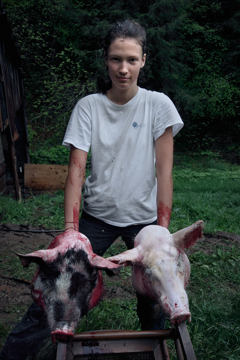 Cheoah Webb Butchering Hogs, Dry Pond, Madison County, NC 2009.