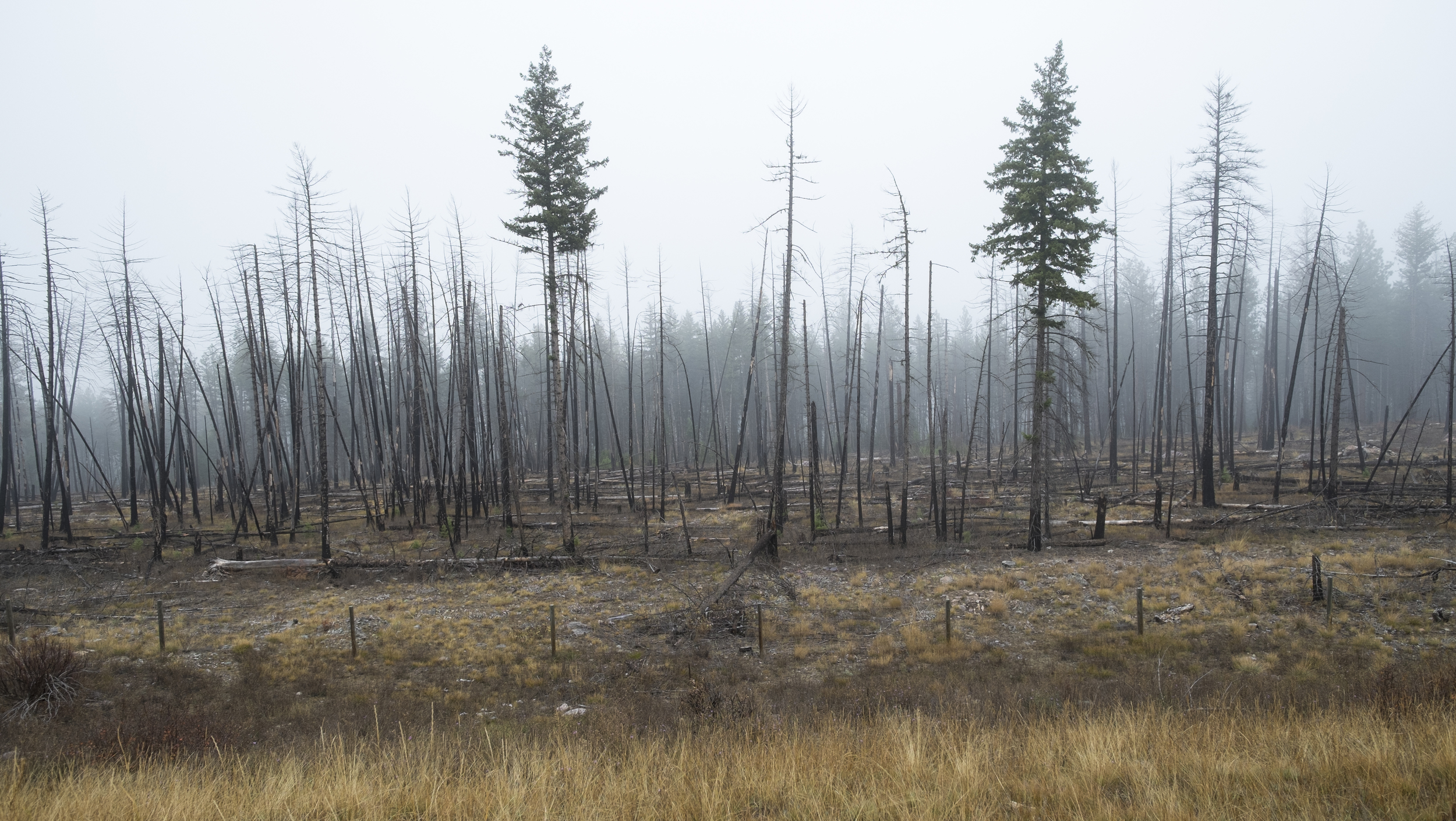 Burned Forest, north of Missoula, Montana 2015