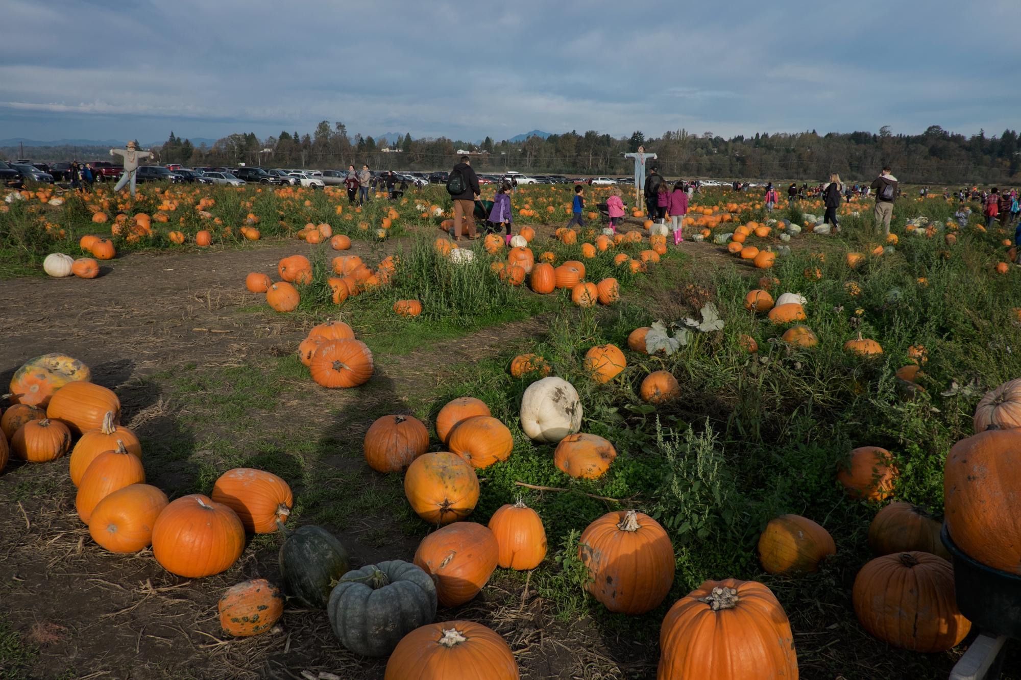 Selfie at the Pumpkin Picking at Craven Farm, Snohomish, Washington