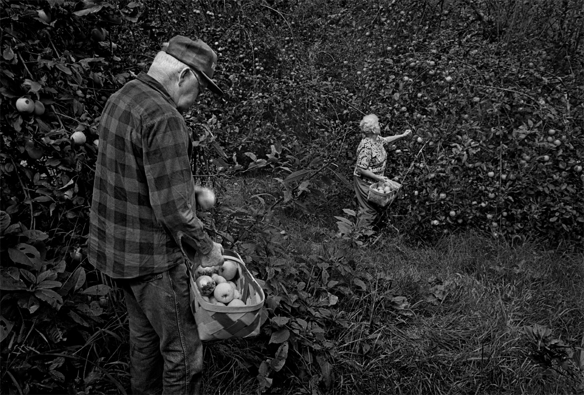 Howard and Lucille Babbitt picking apples from their orchard for the last time at Sprinkle Creek.