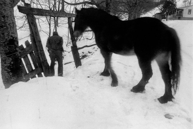 Junior walking Pet to Water, Sodom, Madison County, NC 1979