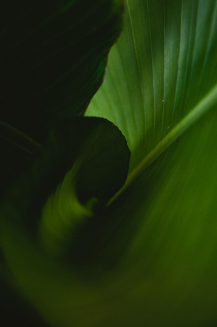 musaindulge-greenleaf.jpg