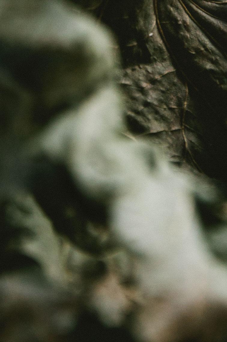 musaindulge-leaf.jpg