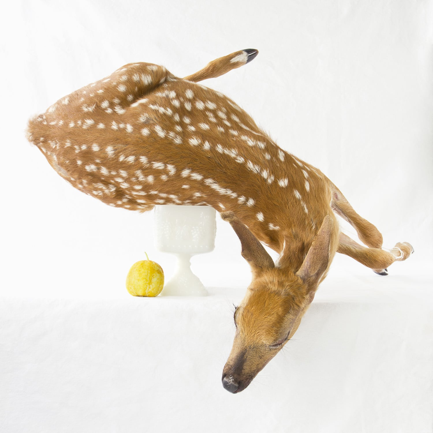 Still Life with Deer & Lemon Cucumber  2012 Archival Pigment Print on rag paper 28 x 28 inch image on 36 x 36 inch paper edition of 5