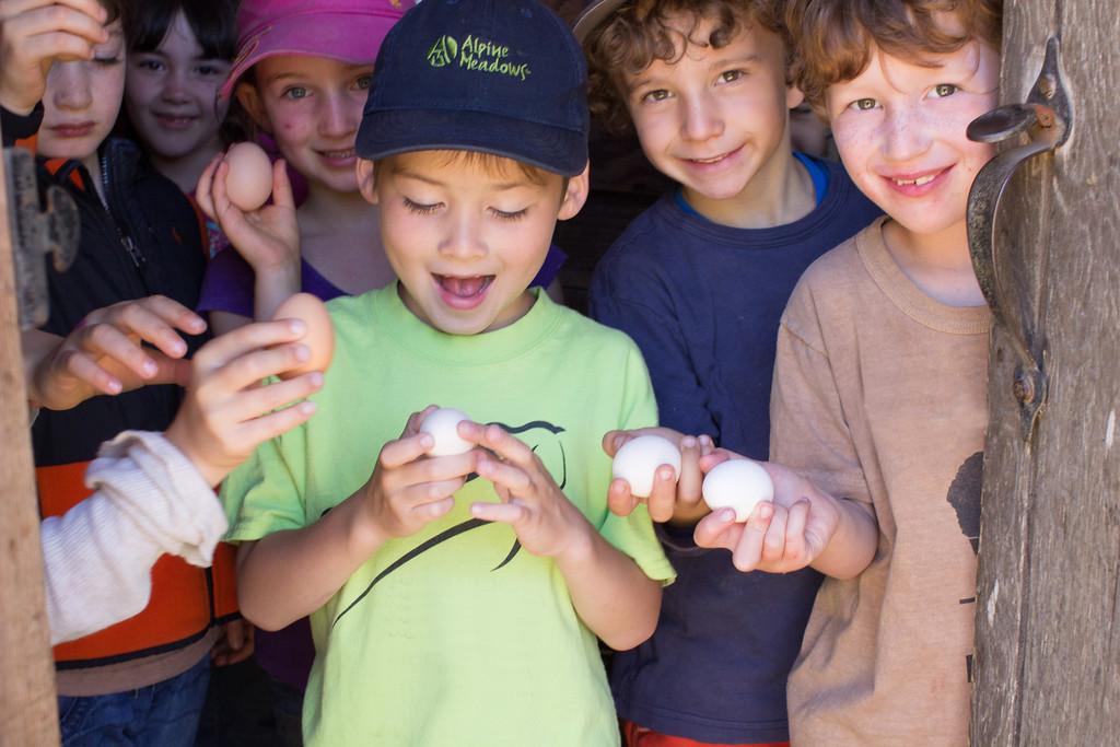 Kids find eggs!