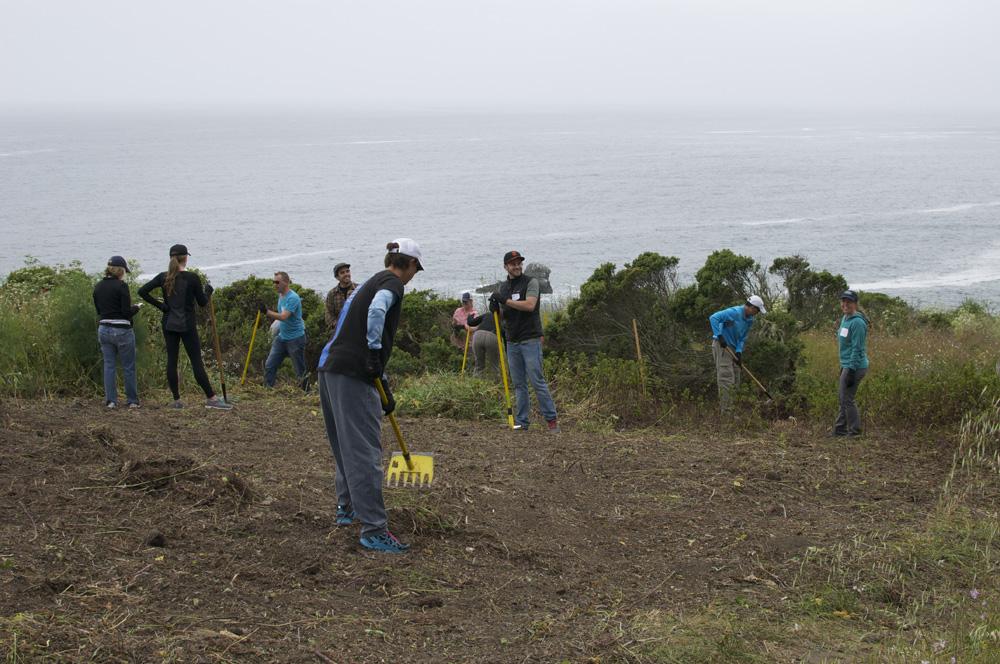 Clif Bar Volunteer Day At Slide Ranch - deweeding_3(1000px).jpg