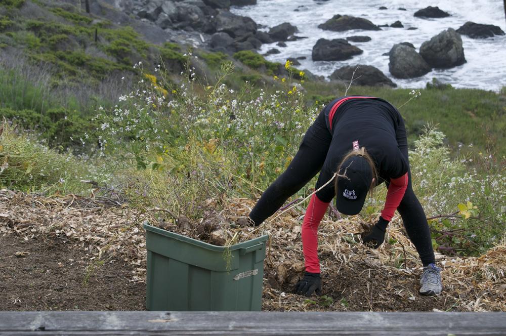 Clif Bar Volunteer Day At Slide Ranch - deweeding_4(1000px).jpg