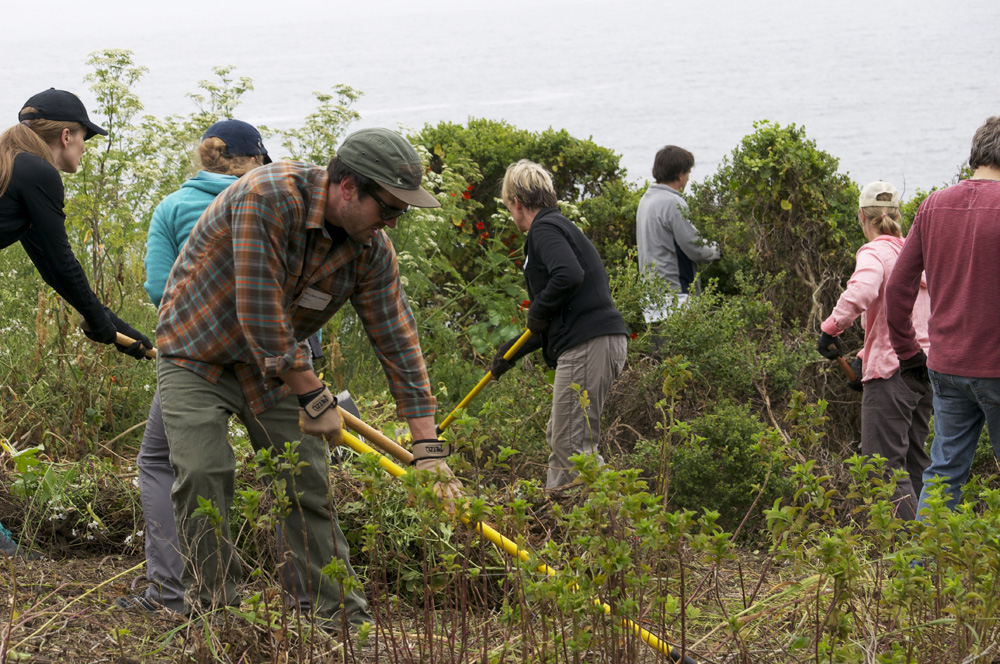 Clif Bar Volunteer Day At Slide Ranch - raking_2(1000px).jpg