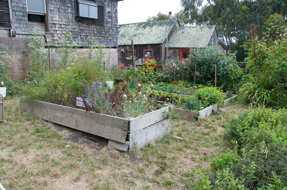 Clif Bar Volunteer Day At Slide Ranch - Garden Beds_before(1000px).jpg