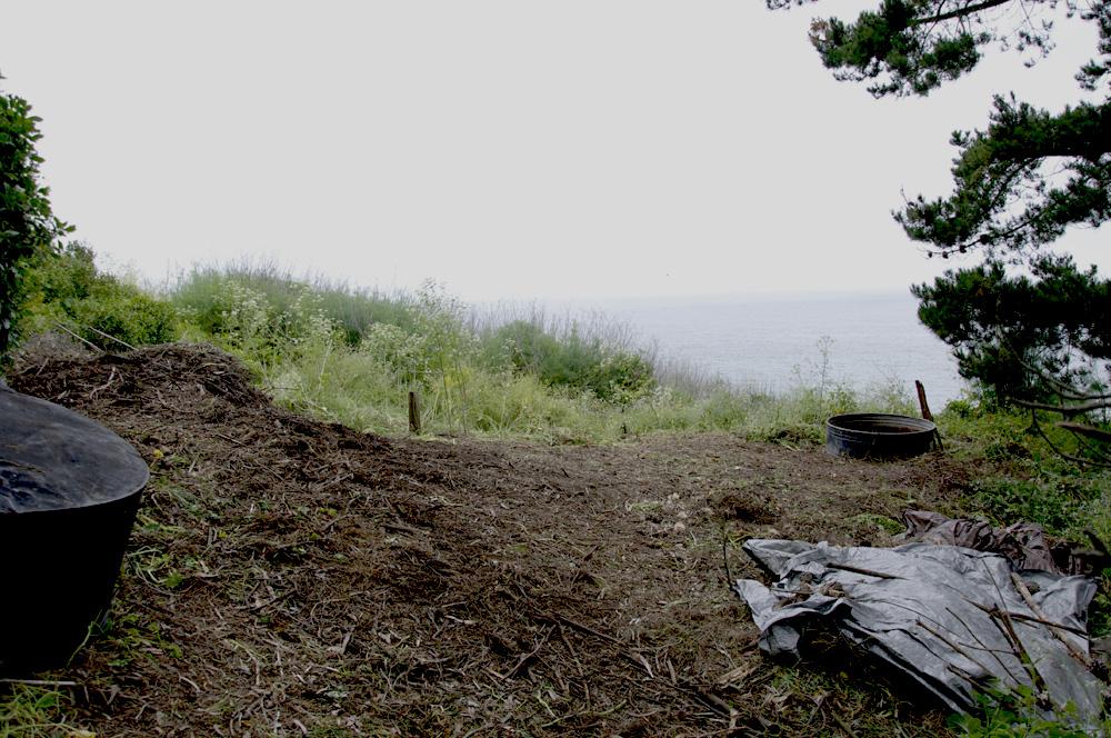 Clif Bar Volunteer Day At Slide Ranch - Invasive species removal_after(1000px).jpg