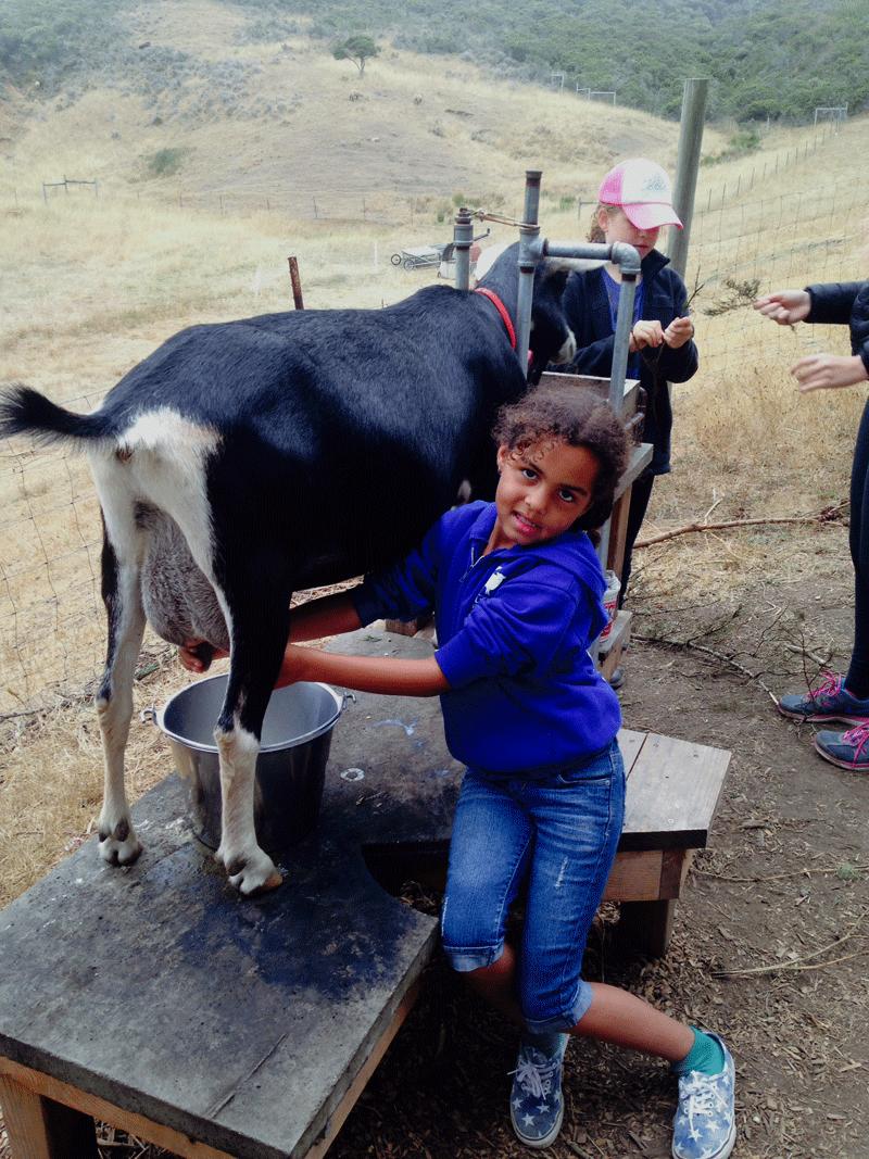 girl-milking-goat.png