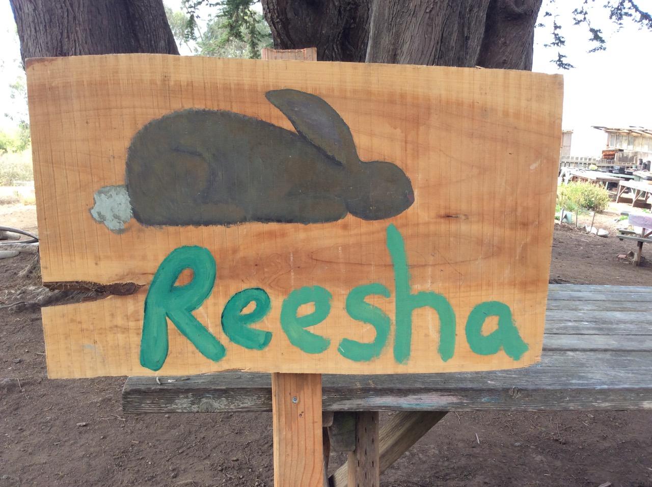Slide Ranch Summer Camp Highlights 2015 - 61 of 71.jpg