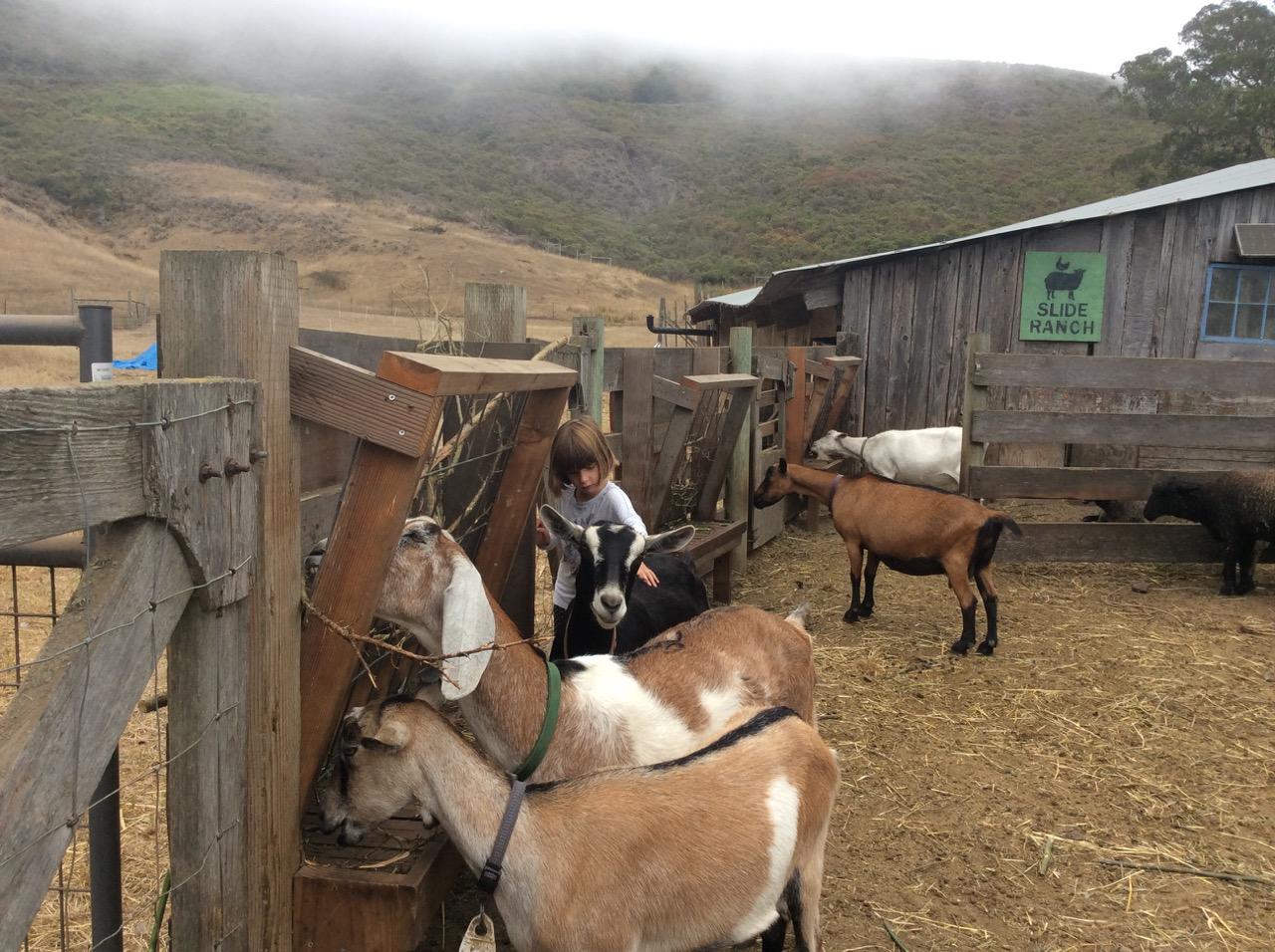 Slide Ranch Summer Camp Highlights 2015 - 46 of 71.jpg
