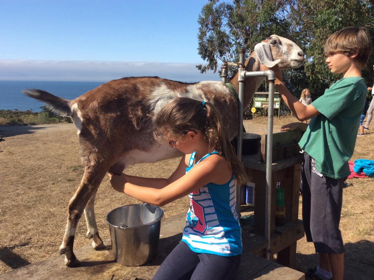 Slide Ranch Summer Camp Highlights 2015 - 32 of 71.jpg