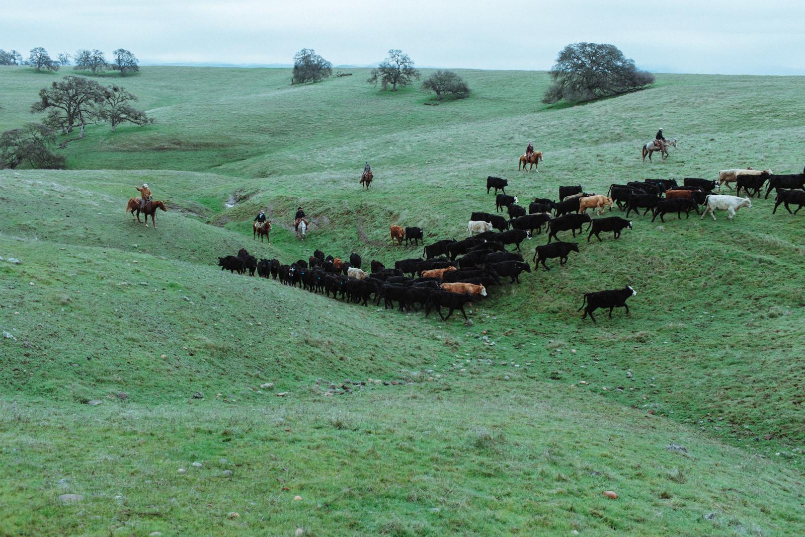 Niederhauser_Ranch_1797.jpg