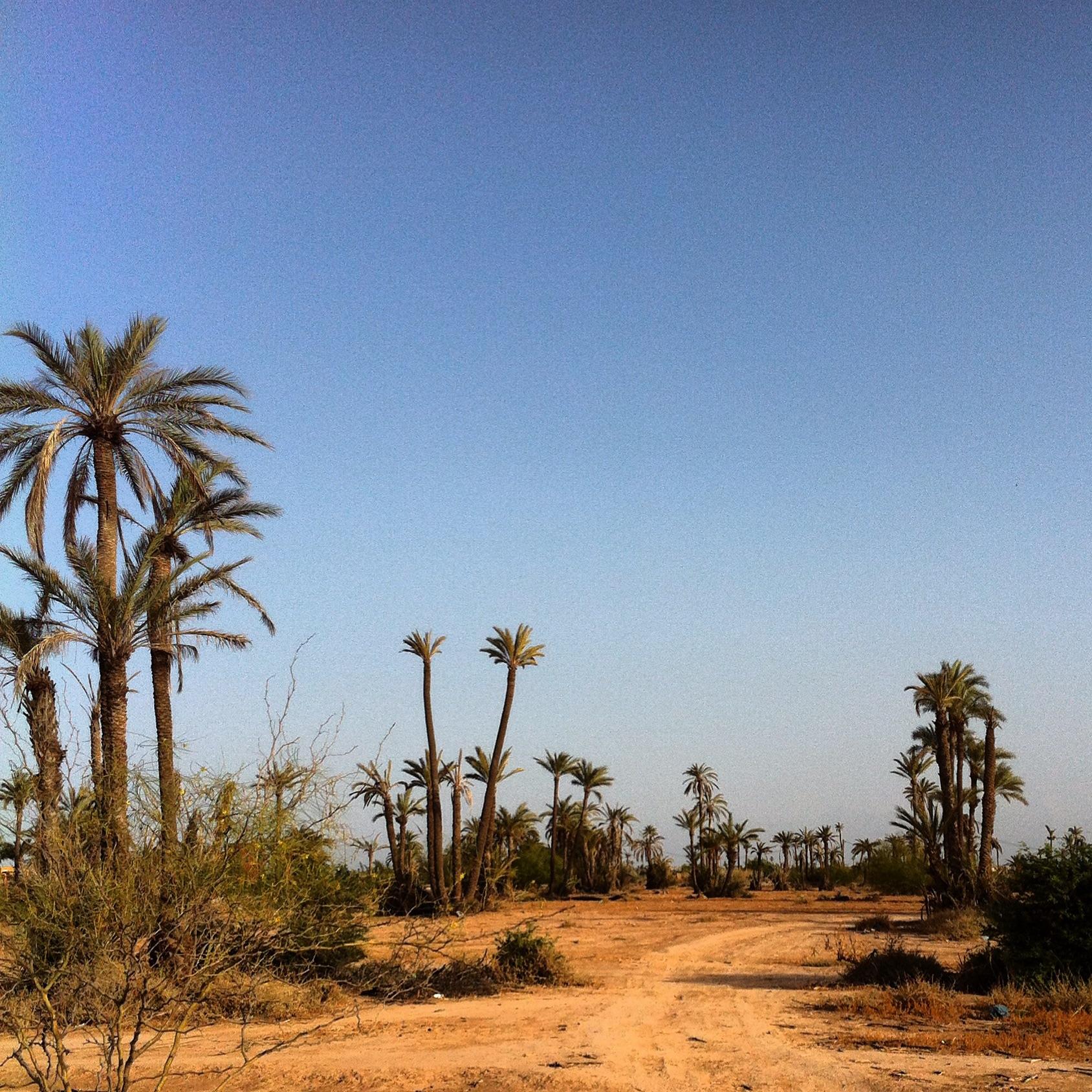 Short trail in Marrakech