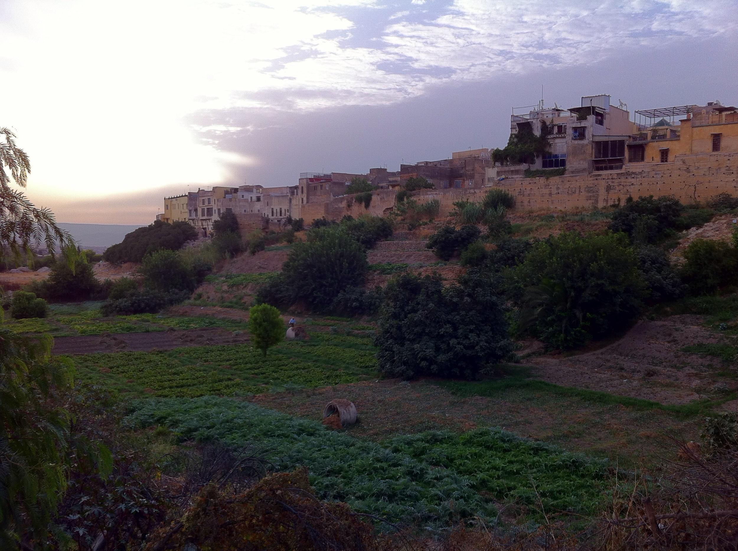 A small farm next to the Fes medina