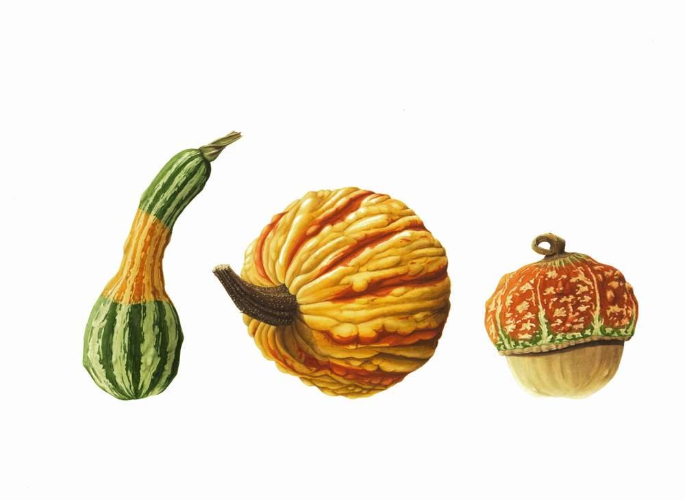 "Cucurbita pepo - Bi-Colour Spoon Gourd  Cucurbita pepo - Warty Gourd  Cucurbita maxima - Mini Red Turban    Watercolour  16"" x 11"""