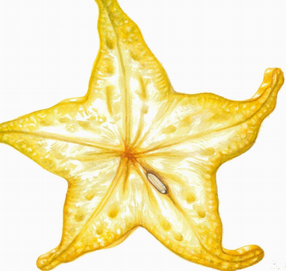 starfruit_sml 2.JPG