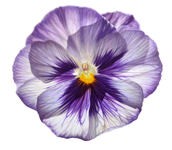 Stained Glass Pansy