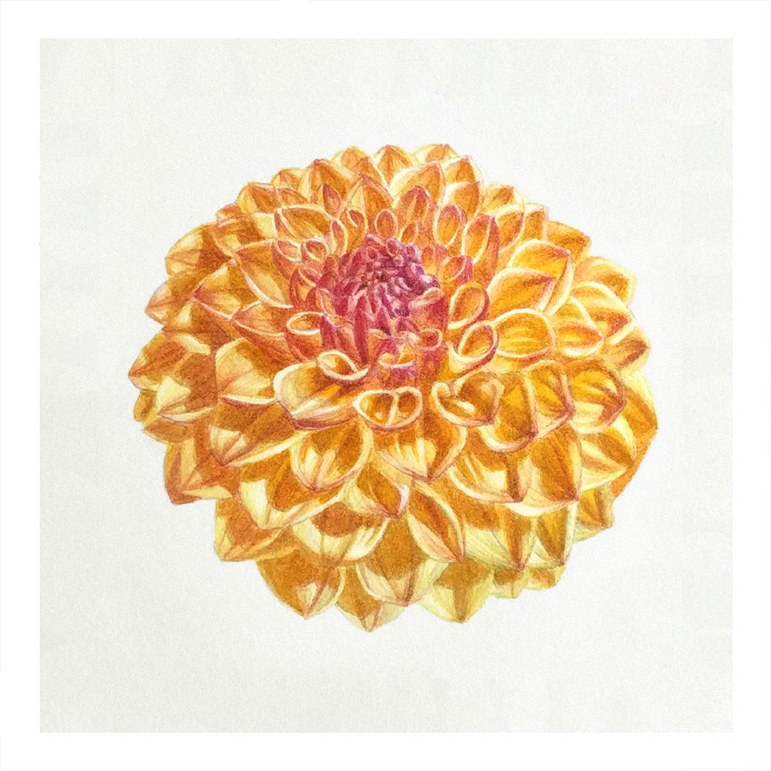 Golden Dahlia -sold