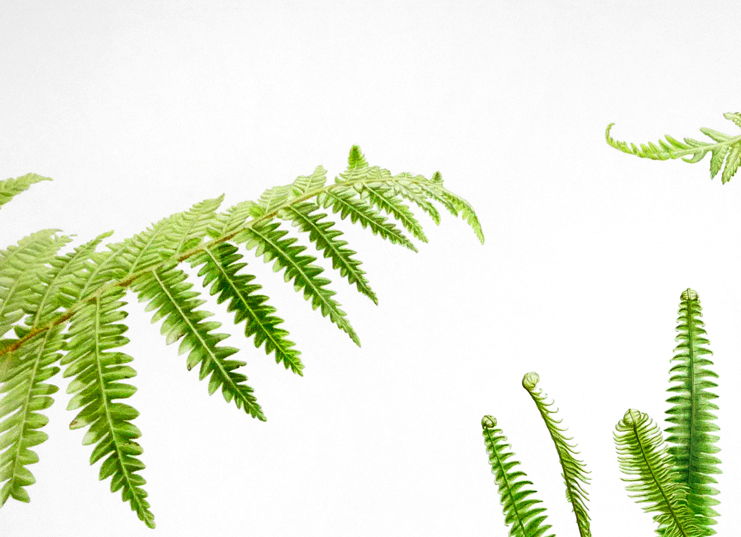 NZ Ferns  diptych 1/2.  SOLD