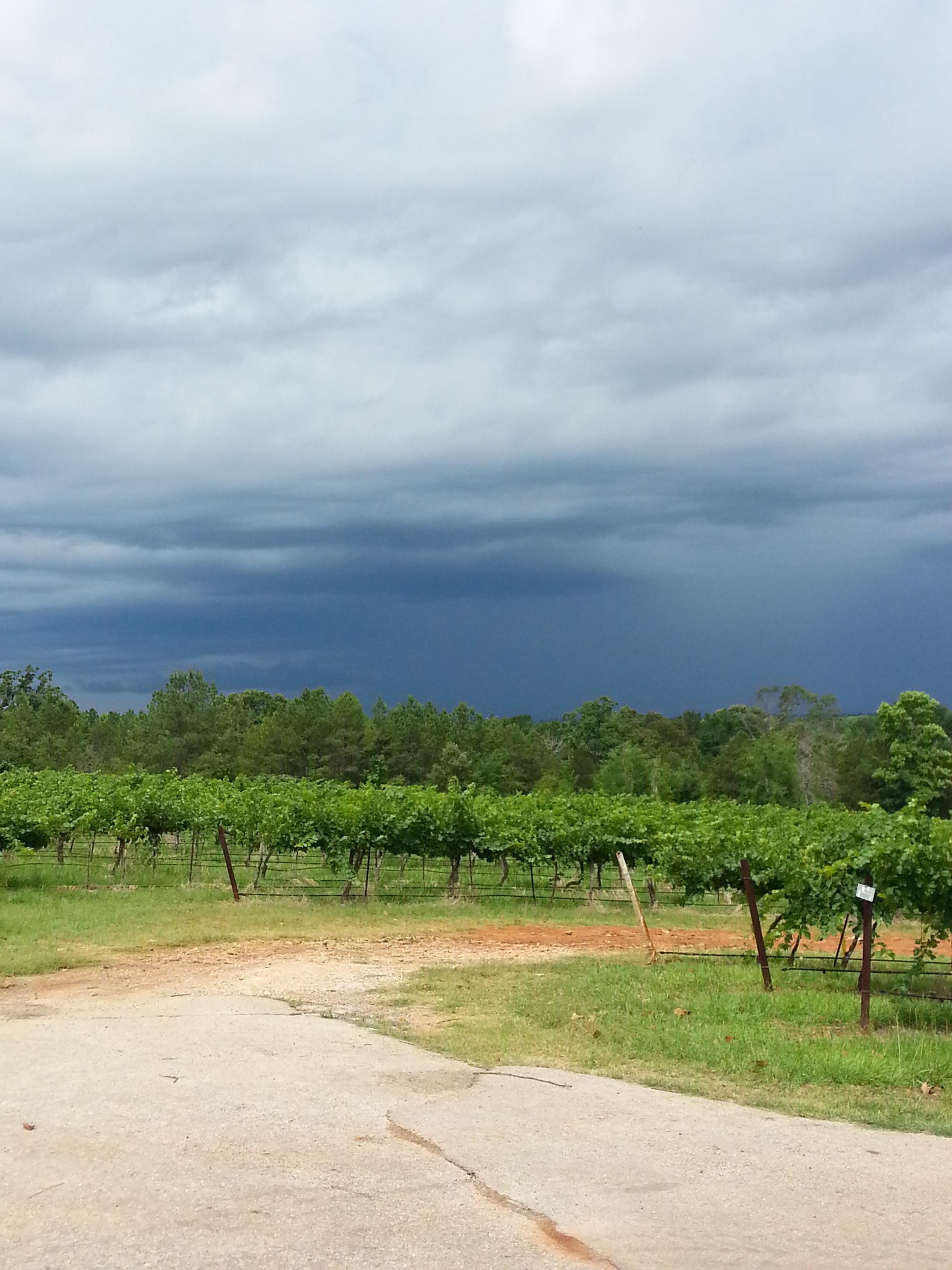 mm_gentle_rains.jpg