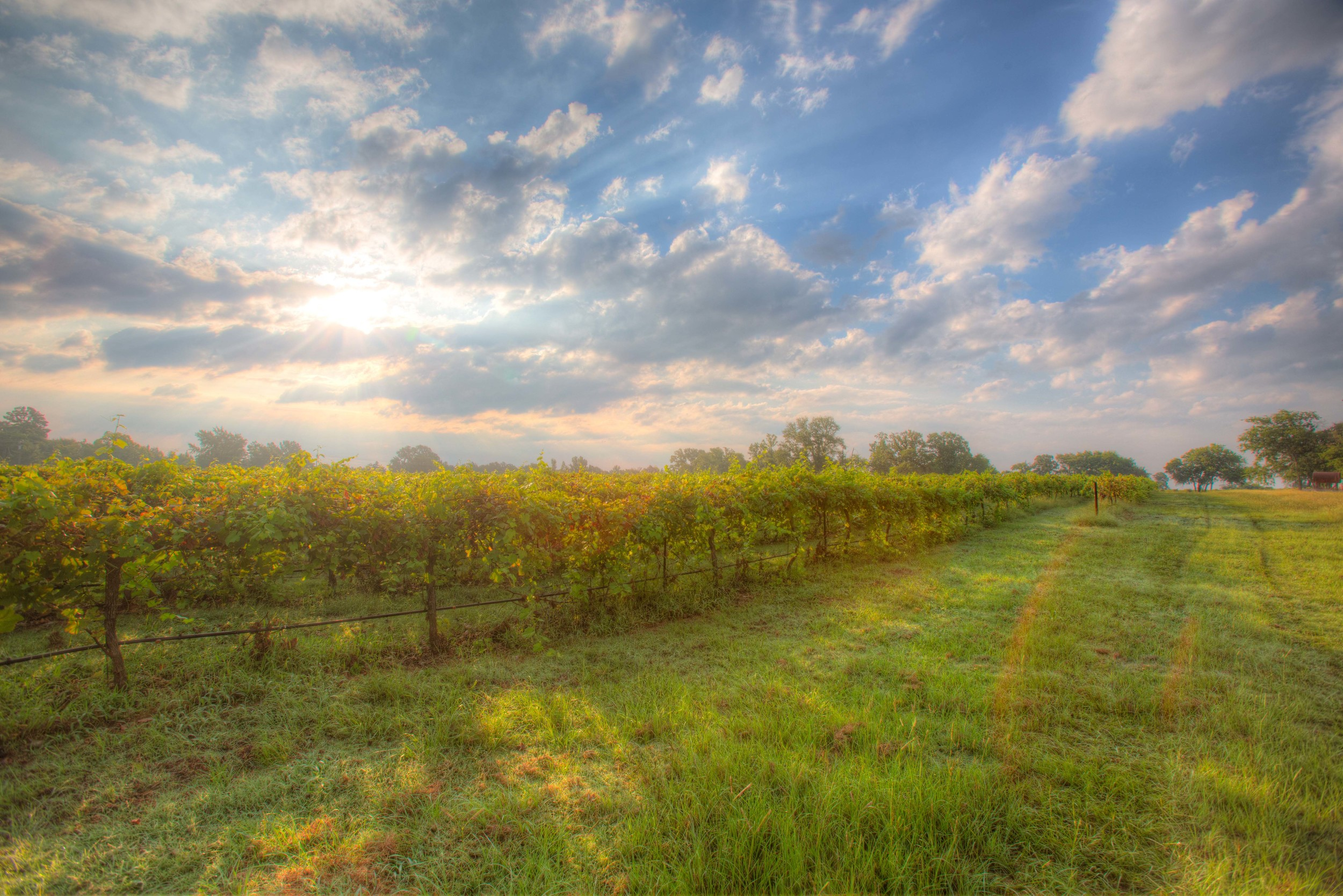 farm_vineyard_views_kiepersol.jpg