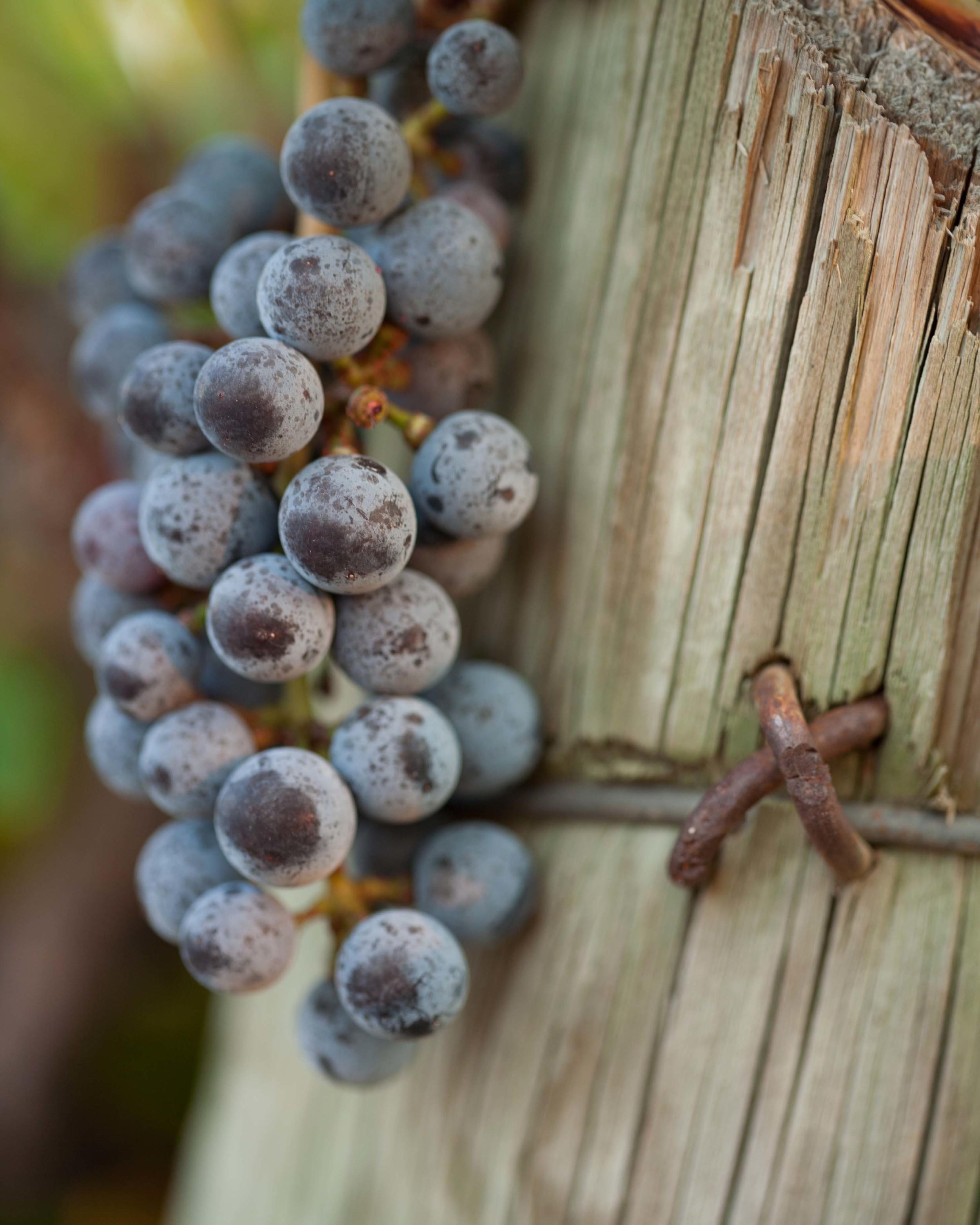 grapes_on_post_kiepersol.jpg