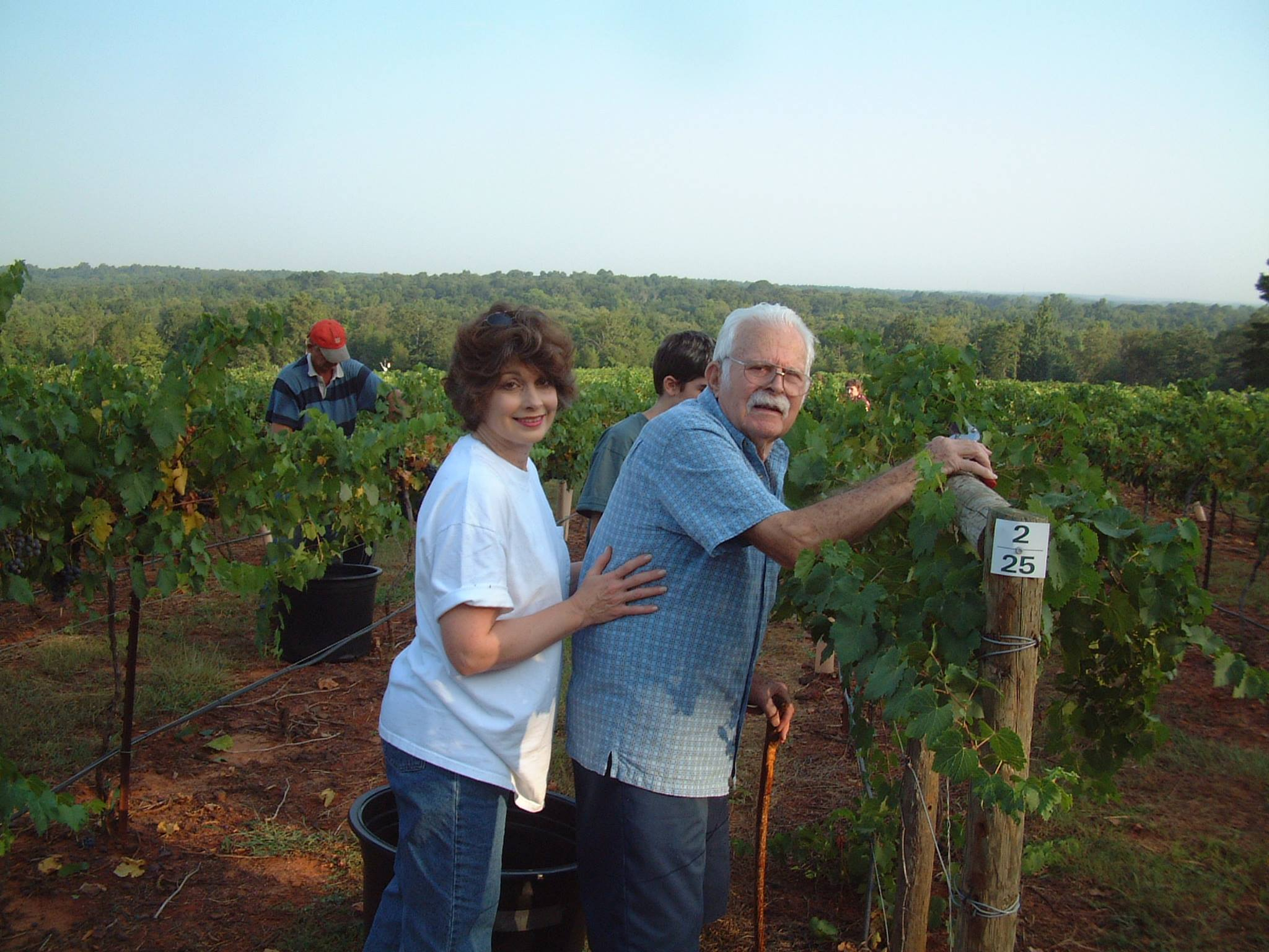 Harvest in the vineyard is a family affair