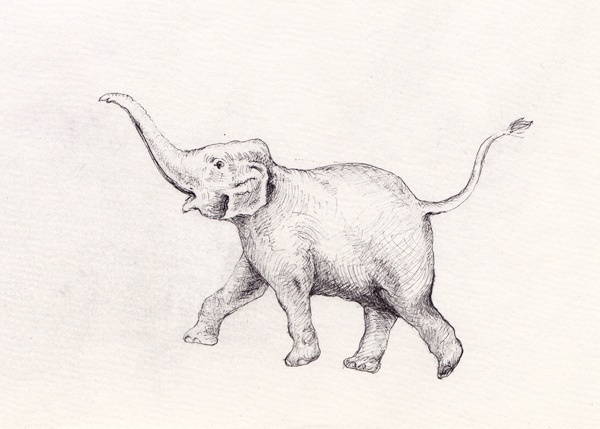 We took a drawing of an elephant that Katie really like. She told me that when the elephant's trunk is pointed up it means good luck.