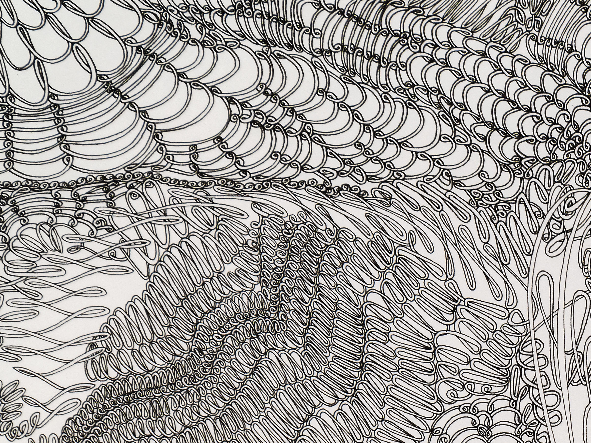 """Knot Within Bounds (DETAIL)"", ink on paper, 22x30, $1,750"