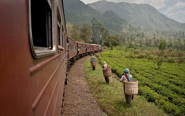 Train Ride through a Tea Plantation