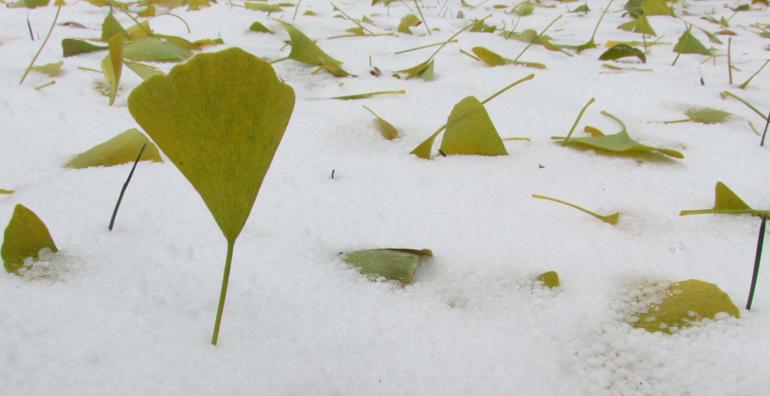 Leaf snow 2.jpg