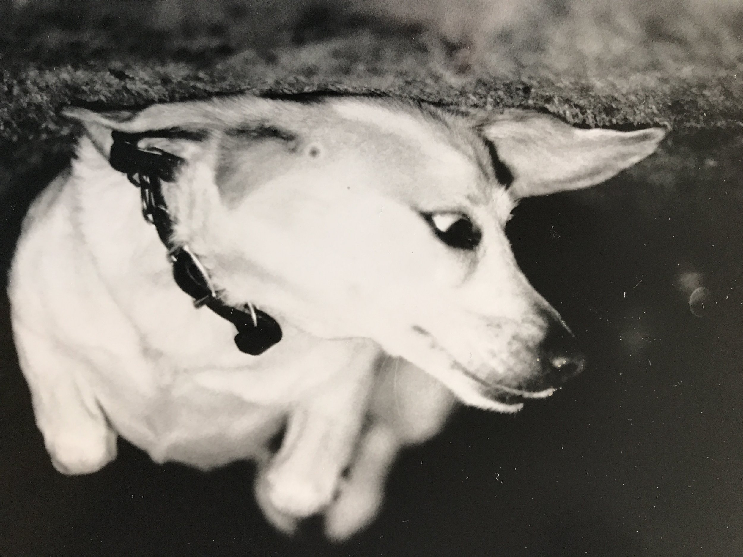 Ginger, my childhood dog and the subject of the poem, in a photo I took when I was a kid.