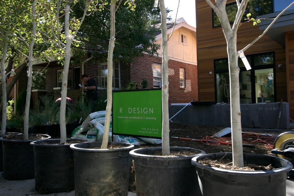 SClarkson-Plants4 2.jpg