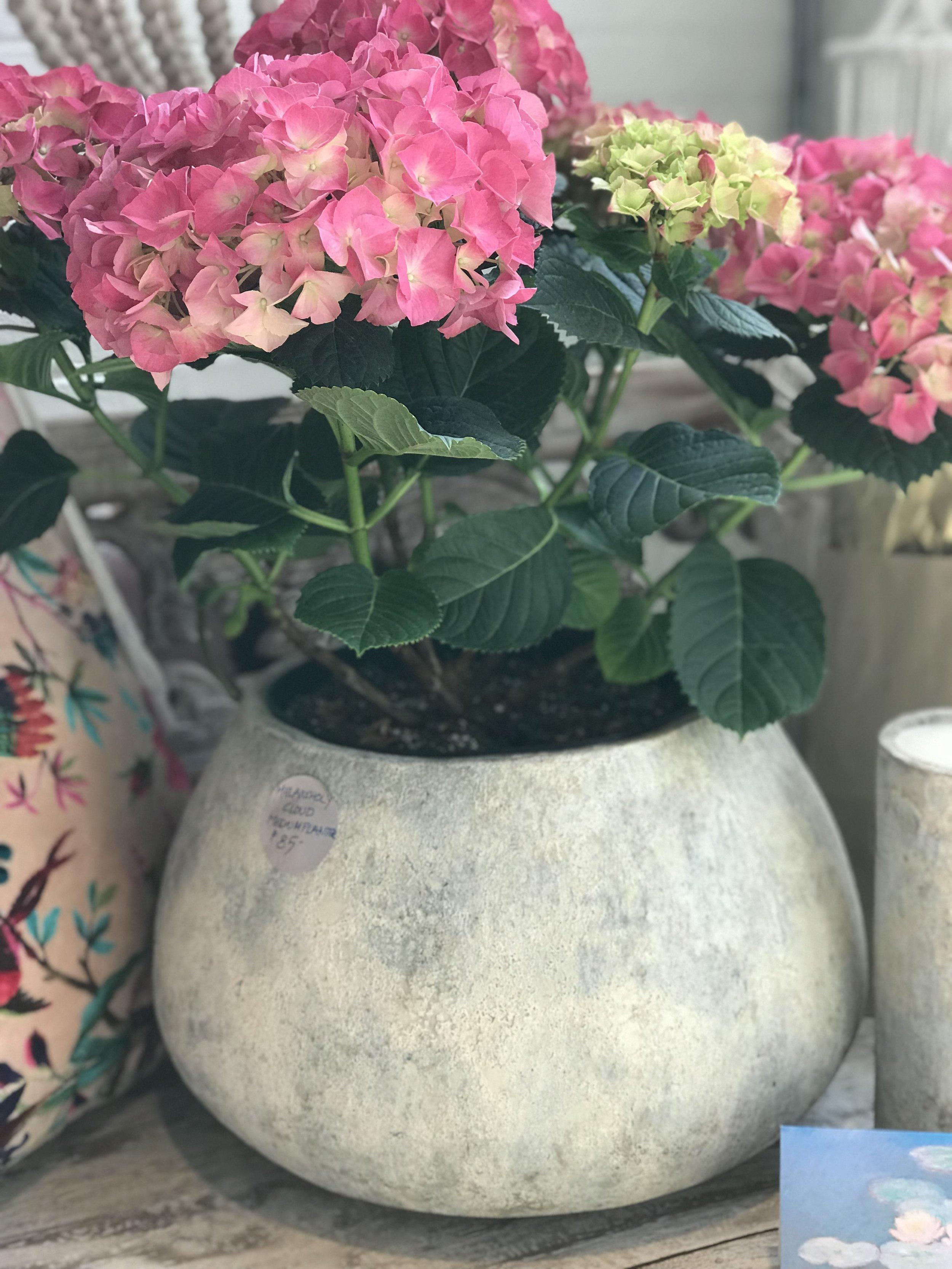 artifact vase. winnipeg furniture.