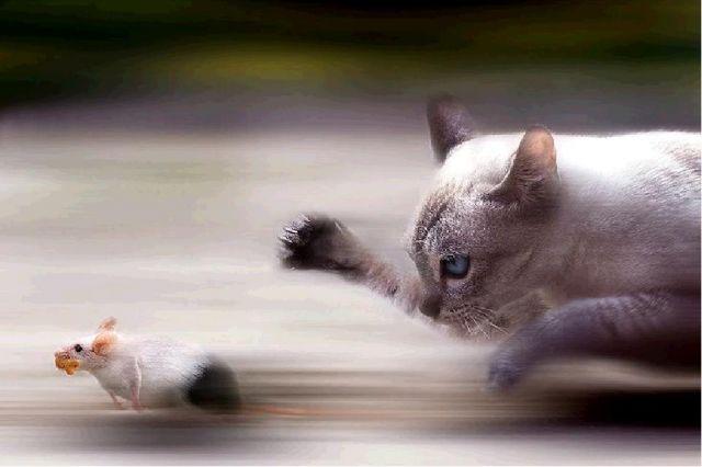 gato-raton-2.jpg