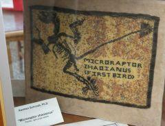 Copy of Microraptor Zhaoianus