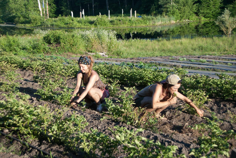 Kieli and Charlotte in the potato field.