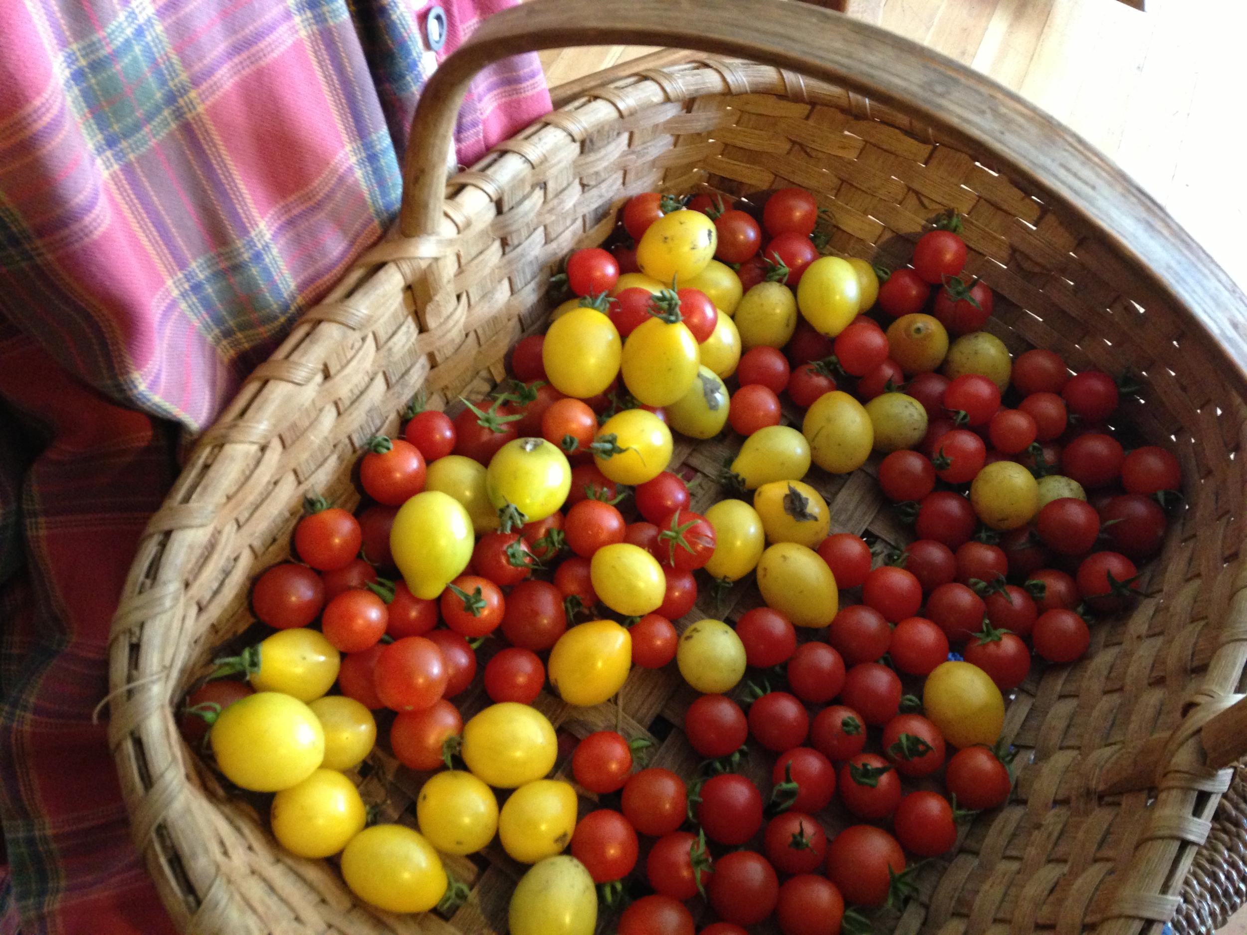cherry tomato basket.jpg