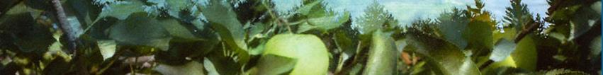 Apple watercolor banner for wufoo.jpg