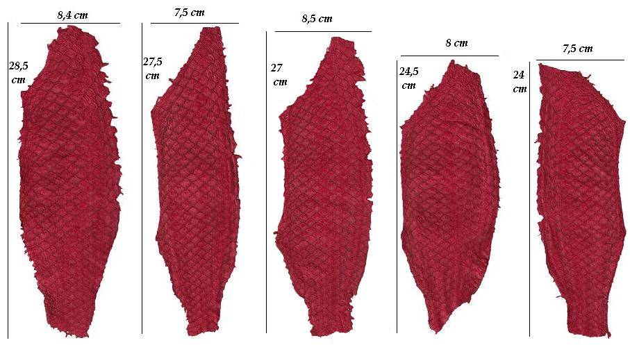 Tilapia leather: size variation within the same order (2013).