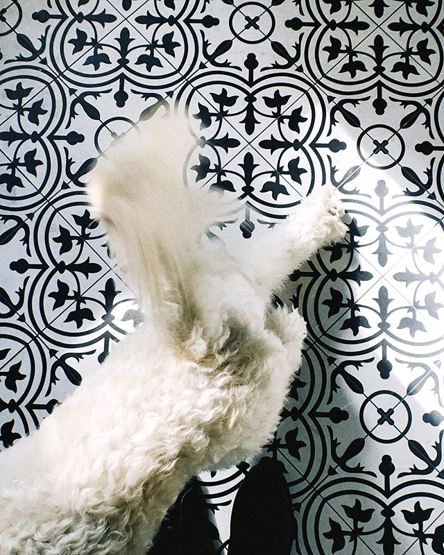 Winslow and I share this thing about floors. #ihavethisthingwithfloors