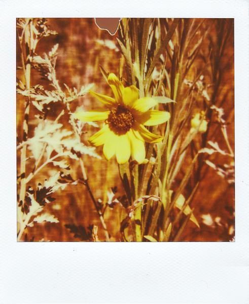 Polaroidsbook 177.jpg