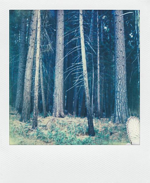Polaroidsbook 438.jpg