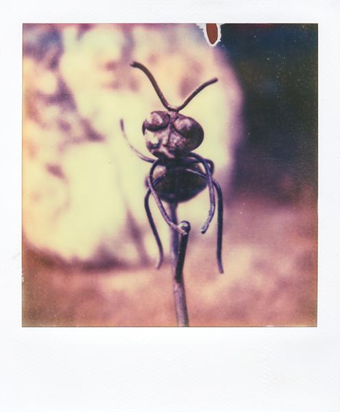 Polaroidsbook 114.jpg